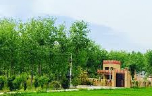 Chahal Tree Farm House